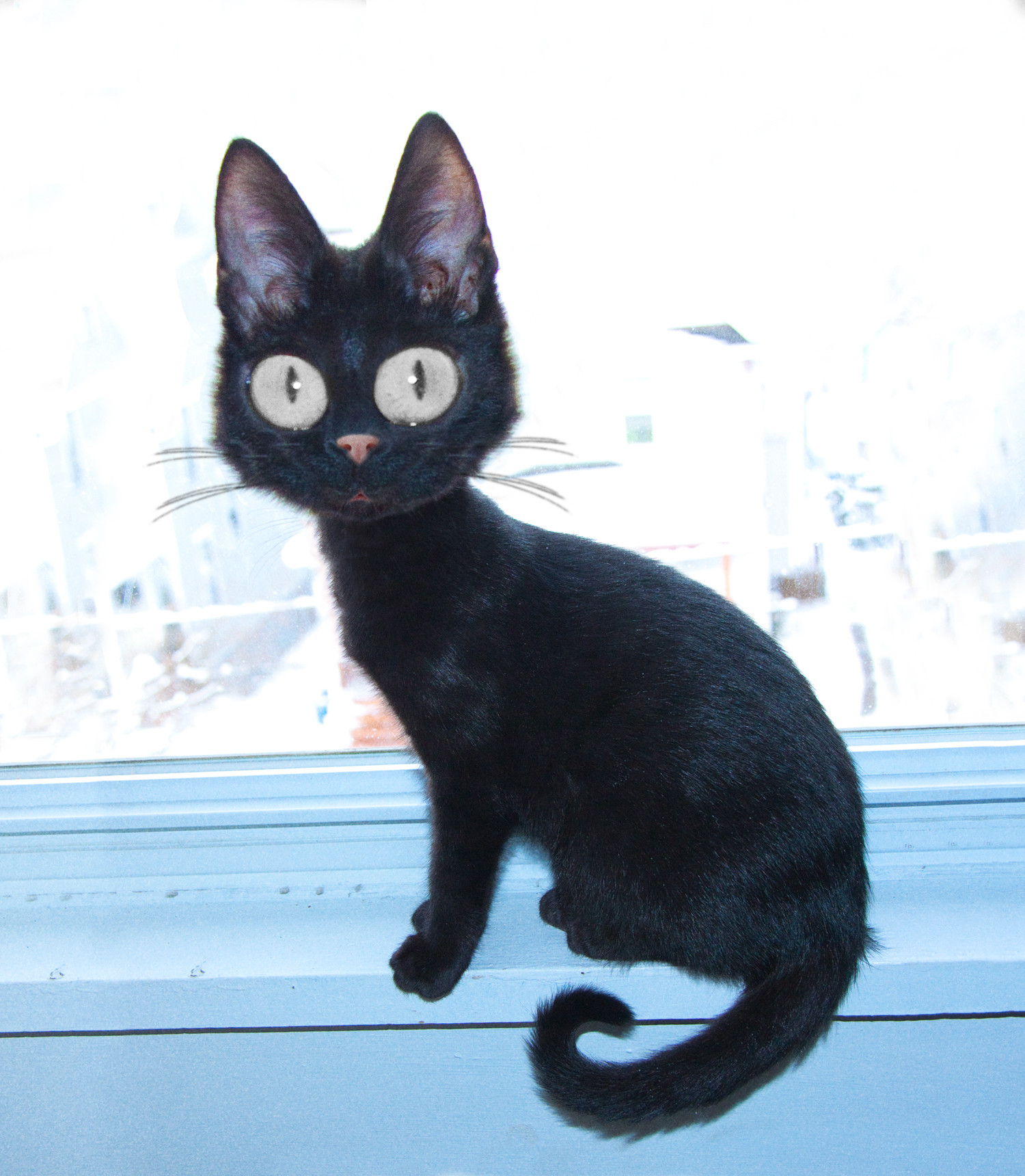 15 - Jiji in Real Life